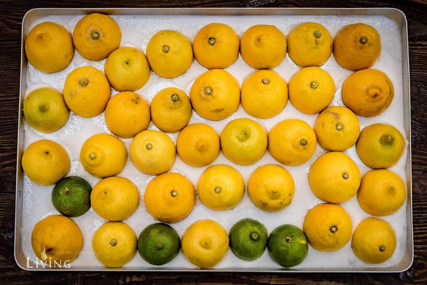 Zitronenhälften in Zucker setzen [object object]_Leonardo Bowle Punch 4 von 13